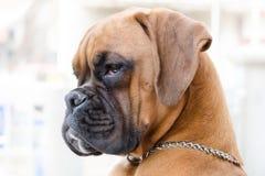 Modèle de chien Images stock