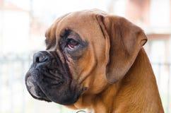 Modèle de chien Image stock