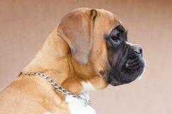 Modèle de chien Photographie stock libre de droits
