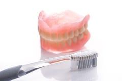 Modèle de dents avec la brosse à dents sur le fond blanc Photographie stock