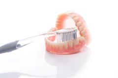 Modèle de dents avec la brosse à dents sur le fond blanc Photos libres de droits