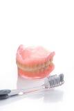 Modèle de dents avec la brosse à dents sur le fond blanc Images libres de droits