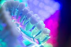 Modèle de dents de dentiste Image stock