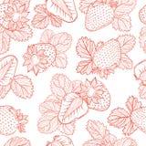 Modèle de dessin de vecteur des fraises Photos libres de droits