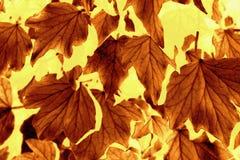 Modèle de feuille d'automne Photos libres de droits