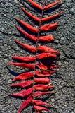 Modèle de feuille de Sumac sur l'itinéraire aménagé pour amateurs de la nature Images stock