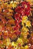 Modèle 3 de feuilles Images stock