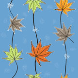 Modèle de feuilles d'automne/feuilles d'érable Images stock