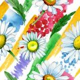 Modèle de fleur de camomille de Wildflower dans un style d'aquarelle Image stock