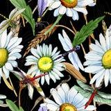 Modèle de fleur de camomille de Wildflower dans un style d'aquarelle Photos stock