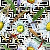 Modèle de fleur de camomille de Wildflower dans un style d'aquarelle Images stock