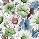Modèle de fleur de camomille de Wildflower dans un style d'aquarelle Photos libres de droits