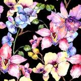 Modèle de fleur d'orchidée de Wildflower dans un style d'aquarelle illustration de vecteur