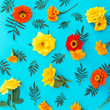 Modèle de fleur des fleurs jaunes et rouges avec des feuilles sur le fond bleu Configuration plate, vue supérieure Fond floral Image stock