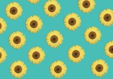 Modèle de fleur des tournesols ou du fond floral vibrant de beau ressort Conception d'été image libre de droits