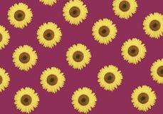 Modèle de fleur des tournesols ou du fond floral vibrant de beau ressort Conception d'été Botanique de concept photo stock