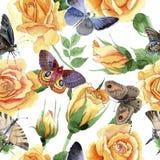 Modèle de fleur jaune de roses de thé-hybride de Wildflower dans un style d'aquarelle Photographie stock libre de droits