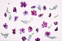 Modèle de fleur pour la carte de voeux Photographie stock libre de droits