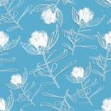 Modèle de fleur sauvage tiré par la main sans couture dans le bleu Photos libres de droits