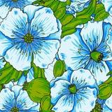 Modèle de fleurs de pavot bleu Photographie stock