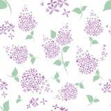 Modèle de fleurs lilas sans couture sur le fond blanc Photos libres de droits