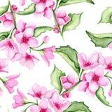 Modèle de fleurs rose Photo stock