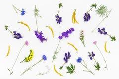 Modèle de fleurs sur le fond blanc Vue supérieure, configuration plate Photos libres de droits