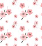 Modèle de fond avec des fleurs de cerisier Photo stock