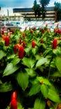 Modèle de fond de fleur de rouge à lèvres photo stock