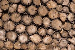 Modèle de fond en bois coupé de mur d'arbre photo stock