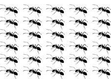 Modèle de fourmi de noir de silhouette illustration libre de droits