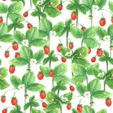 Modèle de fraise d'été Photographie stock