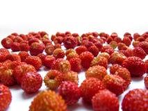 Modèle de fraisier commun, fond, cadre, calibre Image libre de droits