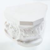 Modèle de gypse de mâchoire humaine sur un fond blanc photographie stock libre de droits