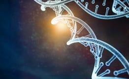 Modèle de l'ADN humaine illustration libre de droits