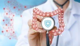 Modèle de l'intestin et du docteur photographie stock libre de droits