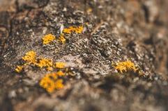 Mod?le de la mousse et du champignon de lichen s'?levant sur une ?corce d'un arbre dans la for?t photo stock