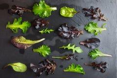 Modèle de laitue de salade sur le fond texturisé foncé Photographie stock libre de droits