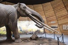 Modèle de mastodonte image stock