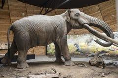 Modèle de mastodonte photos libres de droits