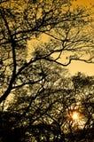 Modèle de nature de silhouette d'arbre Image stock