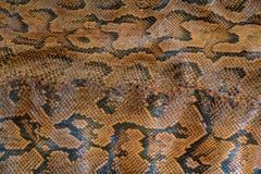 Modèle de peau de serpent de python Image stock
