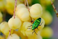 Modèle de point vert de noir d'insecte Photo libre de droits