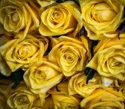 Modèle de Rose jaune Images stock