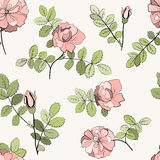 Modèle de roses Photos libres de droits
