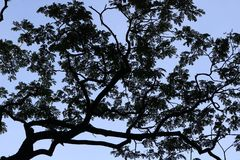 Modèle de silhouette d'arbre Photo libre de droits