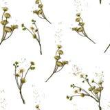 Modèle de Simless fait à partir des herbes sèches Image stock
