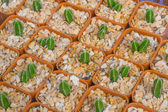 Modèle de sorte de cactus Image stock