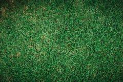 Modèle de texture de champ de vue supérieure d'herbe verte photo stock
