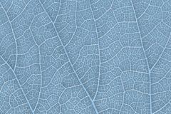 Modèle de texture de feuille pour l'environnement de fond de ressort et la conception de l'avant-projet d'écologie Image libre de droits